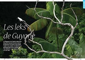 Les leks de Guyane