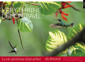 The Montravel erythrina: Life up in the air on a tree on the coast The Montravel erythrina   Life up in the air on a tree on the coast