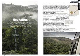 Nouraflux : Décrypter les mystères du carbone forestier