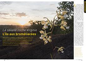 La savane-roche Virginie: l'île aux broméliacées