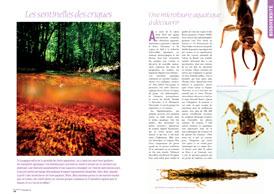 Les sentinelles des criques : Une microfaune aquatique à découvrir