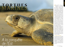 Sea Turtles: conquering the East