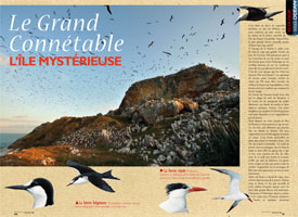 Grand Connétable : The mysterious island
