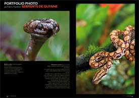 Portfolio : Snakes of French Guiana