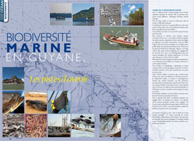 Marine biodiversity in French Guiana : Looking to the future