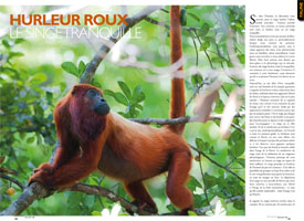 Red howler : The placid monkey