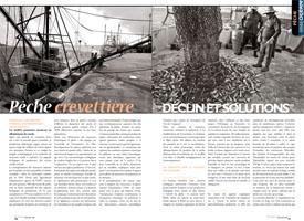 Pêche crevettière : Déclins et solutions