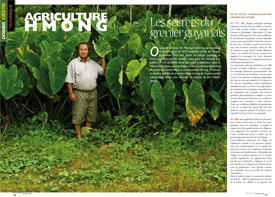 Agriculture Hmong : Les secrets du grenier guyanais