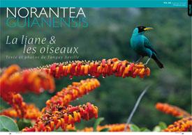 Norantea guianensis : La liane & les oiseaux
