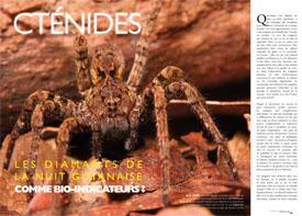 Cténides : les diamants de la nuit guyanaise comme bio-indicateurs ?
