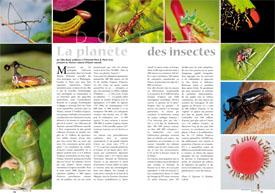 La planète : des insectes