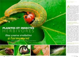 Plantes et insectes herbivores : Une course évolutive à l'armement