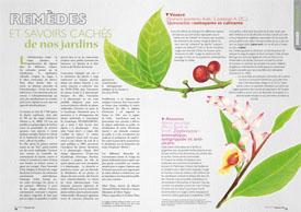 Remèdes et savoirs cachés : de nos jardins