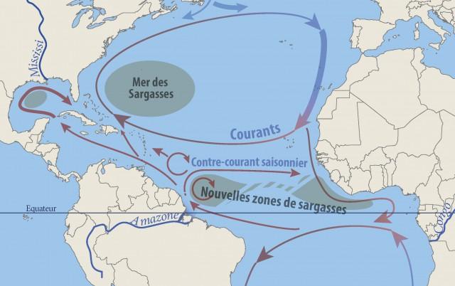 Un contre-courant nord équatorial circule vers l'Afrique tout l'été. À la faveur de sa lente mise en place au printemps, les algues s'accumulent au large de l'Amazone, faisant de cette région du Pot au noir la plus dense en sargasses. L'essentiel des radeaux d'algues s'échouant aux Antilles provient de là. Les autres sont portés par les courants annuels, directement ou après avoir dérivé au gré de contre-courants.