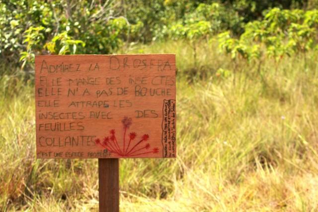 PÉDAGOGIE : Un Club CPN (Connaître et Protéger la Nature) à Yiyi