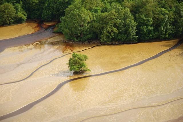 INVENTAIRE : Les mangroves à l'étude