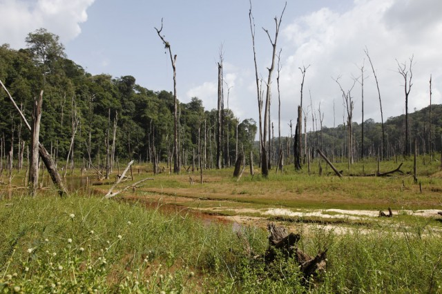 POINT DE VUE : Forêt : année internationale de la forêt... A quoi s'attendre ?