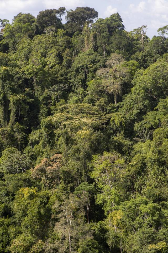 L'Amazonie perd ses capacités de stockage