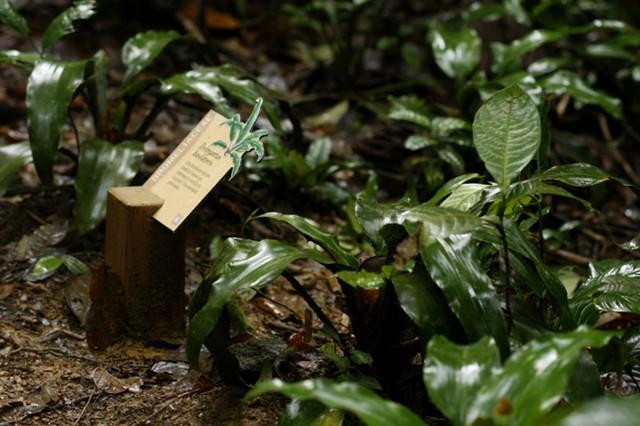 Sentier botanique Trésor : Une nouvelle signalétique pour la découverte des arbres et des plantes de sous bois.