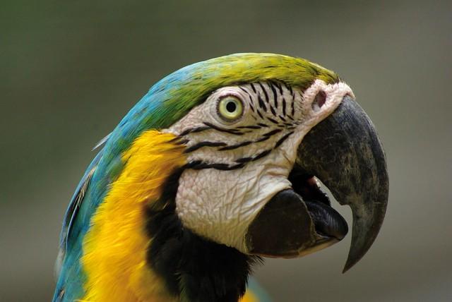 SOIN : Soigner et réintroduire les oiseaux dans leur milieu naturel