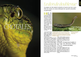 Crotales: Le don de double vue
