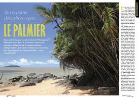 Au royaume des arbres règne...: Le palmier