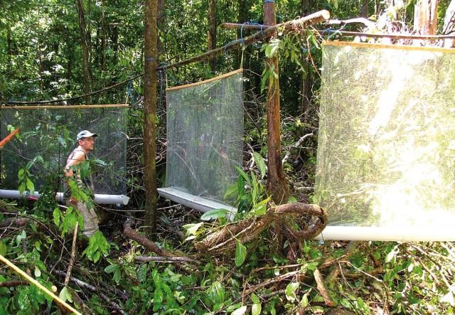 INSECTES : Etude de l'entomofaune de Saül