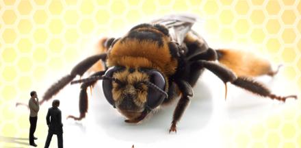 Rentrée du Café des Sciences : Des abeilles et des hommes