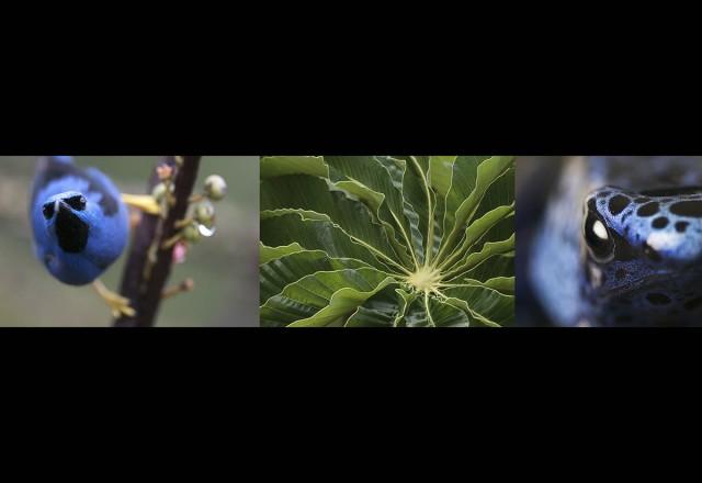 Symbiose : la vidéo Une saison en Guyane de l'exposition Pigments.