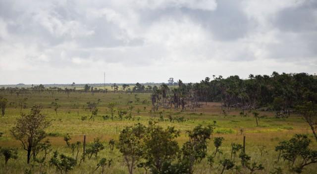 AMAPÁ : Les titres fonciers douteux des géants de la cellulose