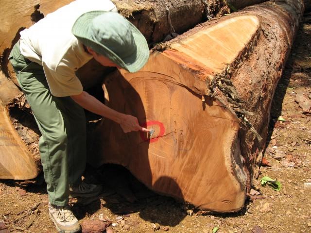SEMAINES DU DEVELOPPEMENT DURABLE 2013 : à la découverte de l'exploitation forestière