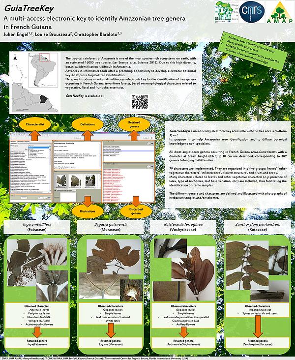 GuiaTreeKey : une clé électronique à entrées multiples pour identifier les genres arborés de Guyane
