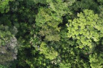Forêt amazonienne : le premier inventaire à grande échelle révèle une hyper dominance de 227 espèces d'arbres