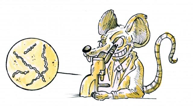 Les chroniques de Doc Lucho : Les tropiques en proie à la maladie du rat