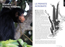Kwata, le singe araignée : Le primate acrobate