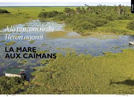 La mare aux caïmans : à la rencontre du héron agami