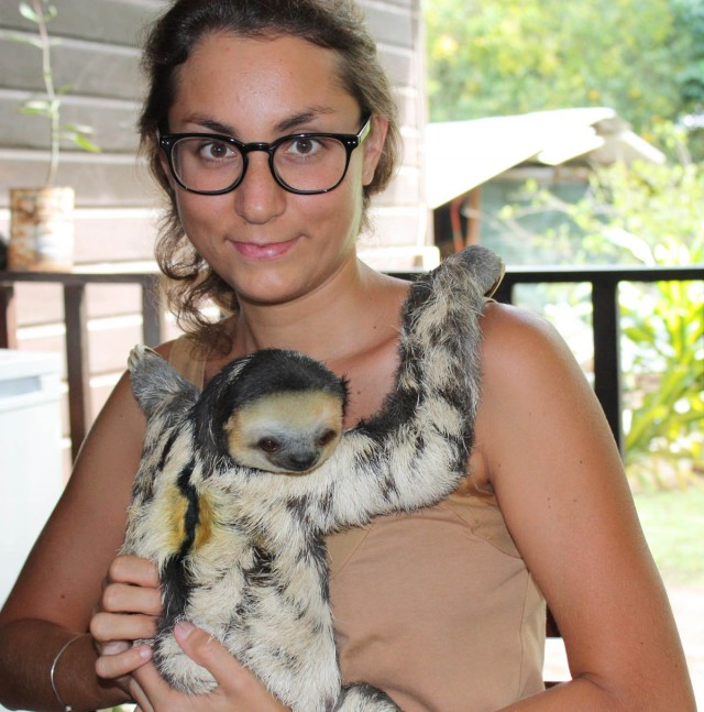 Chou Aï : A la découverte des paresseux