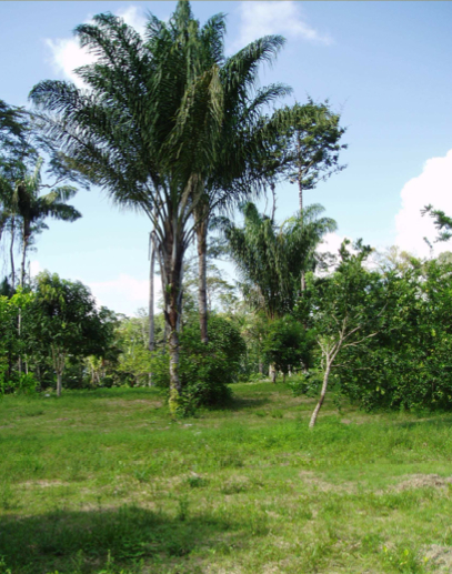 Invitation au séminaire : Les plantes médicinales un enjeu de développement pour la Guyane