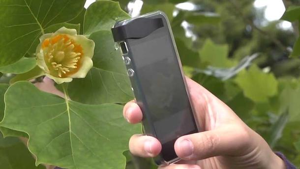 Projet Pl@ntNet :Bientôt une application d'identification de la flore sur smartphone en Guyane?