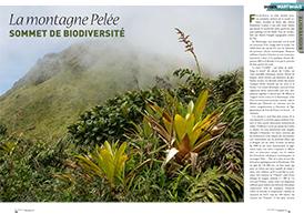 La montagne Pelée: sommet de biodiversité