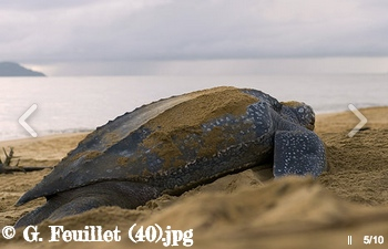 Un nouveau site internet : Pour les tortues marines