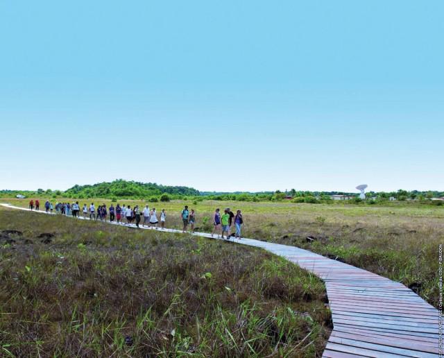 Centre Spatial Guyanais :Un sentier des savanes aux pieds d'Ariane